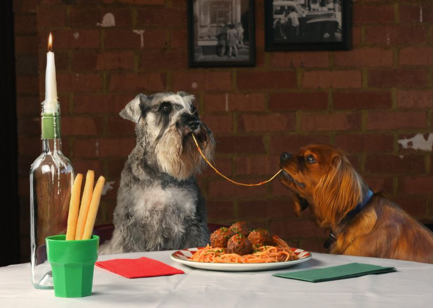Frankie Lady and the Tramp